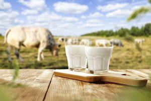 Çavuşoğulları Süt